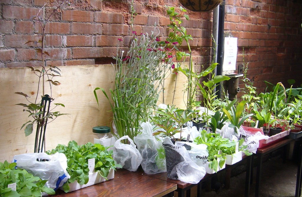 Hidden Gardens of Bury St Edmunds plant sales